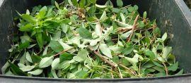 En automne, diminuez vos déchets verts avec le compost